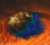 *Peacock Body Feathers, Blue