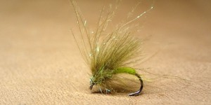 GP CDC Sparkle Caddis